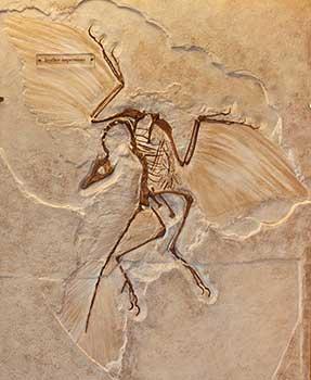 Archaeopteryx ile ilgili görsel sonucu